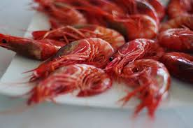gamba roja de Denia, bohosuitesdenia
